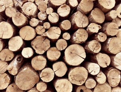 stack-tree-stump-background-firewood_93853-543